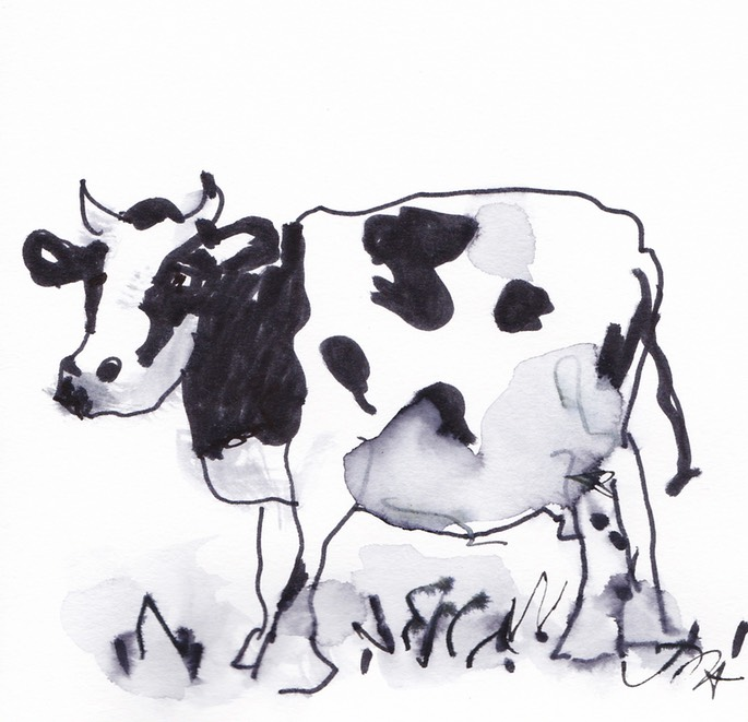 black and white cow 2